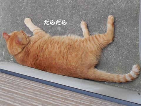 15_08_08_3.jpg