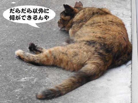 15_08_08_4.jpg