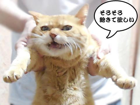 15_08_13_4.jpg