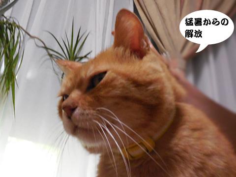 15_08_15_4.jpg