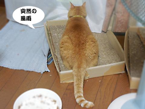 15_08_17_3.jpg