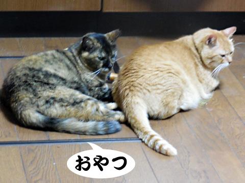 15_08_19_2.jpg