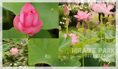 季節の花「蓮・睡蓮」を見に⑦