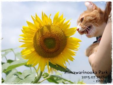 季節の花「ひまわり」を見に③
