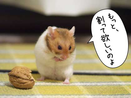 baki4.jpg