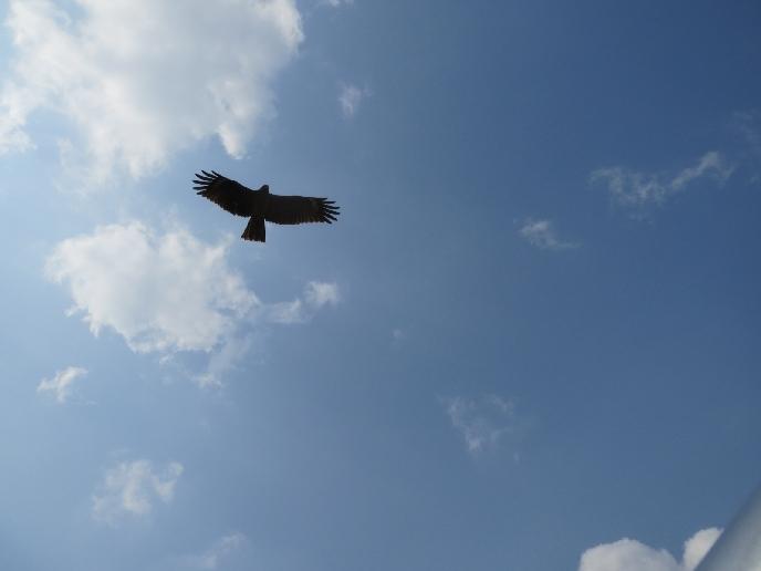birdskingsking.jpg
