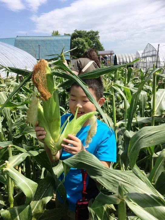とうもろこし収穫体験旭川ふるさと旅行2