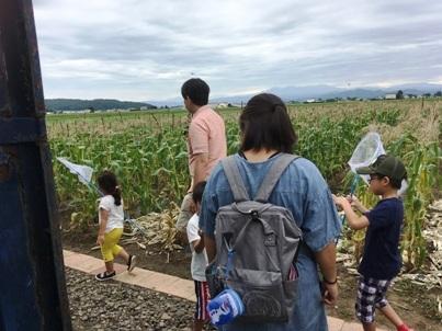 とうもろこし収穫体験旭川ふるさと旅行4