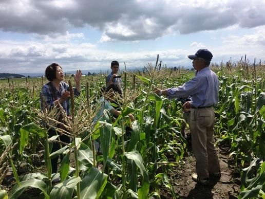 とうもろこし収穫体験旭川ふるさと旅行3