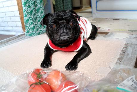 トマトだって