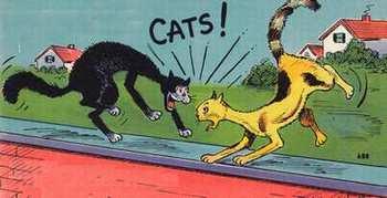 cat1582