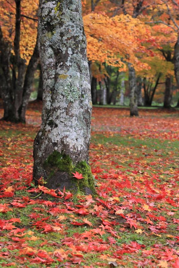 018A6311 存在感のある木