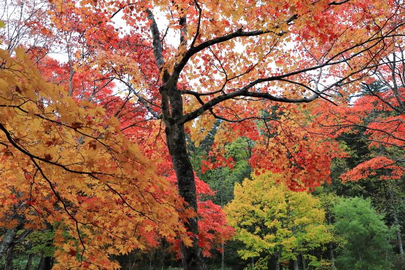 018A6365 艶やかな紅葉