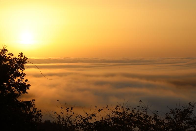 018A7501 朝日に染まる雲海