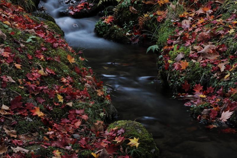 018A6708 小さな川の流れ