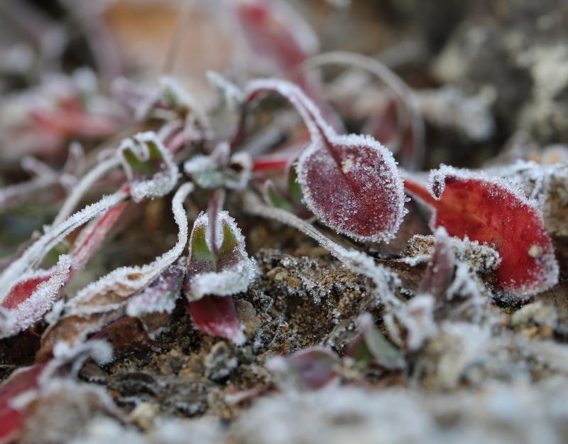 018A7276 氷の花