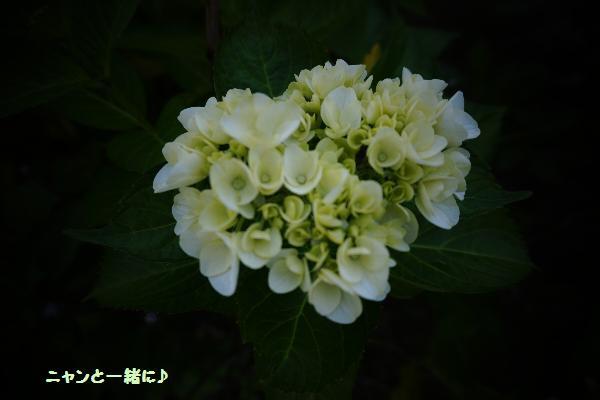 トイカメラ719