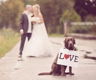 犬と一緒に結婚式_画像_かわいい_ラブラドールレトリバー