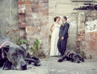 Wedding-Dog-2.jpg