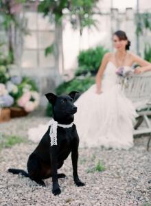 Wedding-Dog-Lace-Collar.jpg