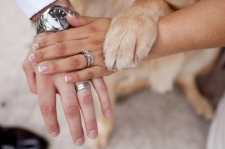 bride-groom-dog-ring-shot.jpg