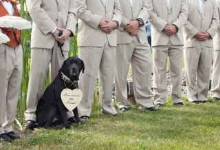 dog-at-wedding-ceremony-with-modern-style-and-dogs-in-wedding-ceremony.jpg