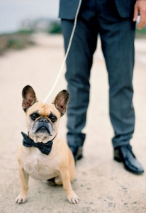 dog-bowtie.jpg
