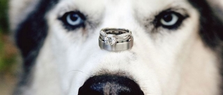 dog-in-Wedding.jpg