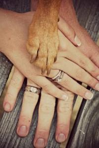 dog-wedding-photo_pic.jpg