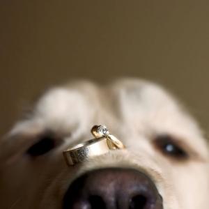 dog-with-wedding-rings_0.jpg