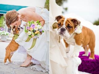 pet-in-wedding-1.jpg