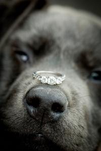 puppy-dog-engagement-ring-photo.jpg