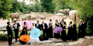 wedding-at-a-zoo.jpg