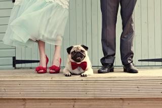 wedding-dogs.jpg