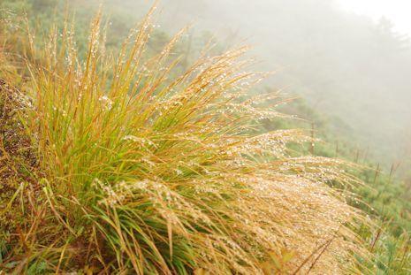 アポイの高山植物