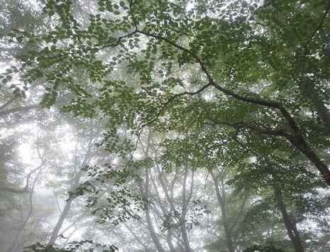 霧の檜洞丸