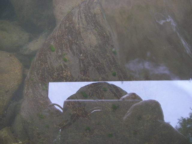 P8130355 小黒川 水面にて撮影.jpg