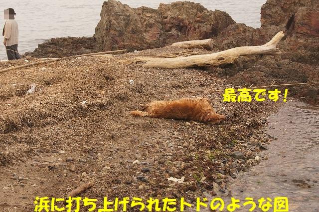DSC06442_20150818145711129.jpg