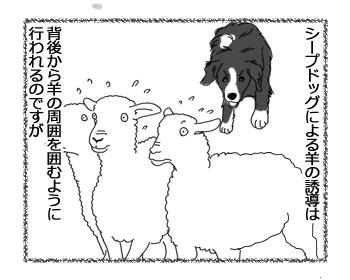羊の国のラブラドール絵日記シニア!!「CとY」1