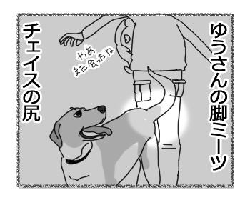 羊の国のラブラドール絵日記シニア!!「お尻のフタ」4