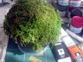 苔玉っぽい物を作る2