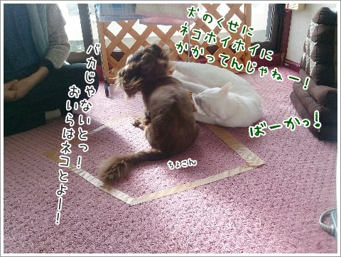 fc2_2015-01-15_09.jpg