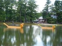2018-06-30平泉-毛越寺アヤメ祭り-しろぷーうさぎ177