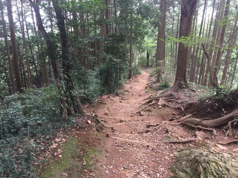 hiwadayama110.jpg
