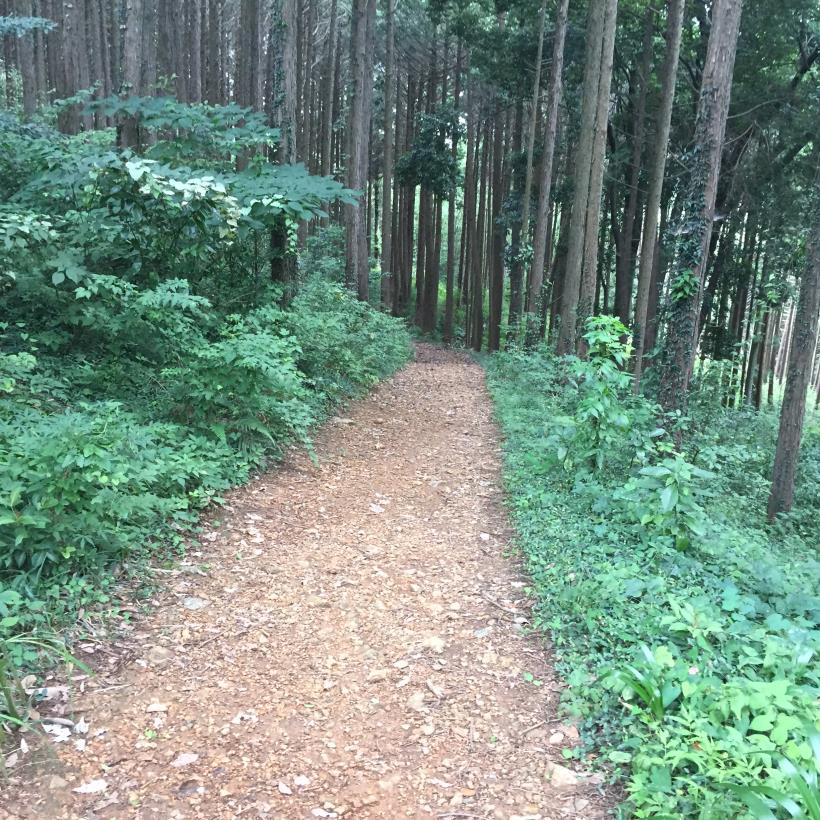 hiwadayama98.jpg