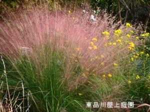 myu-ren1.jpg
