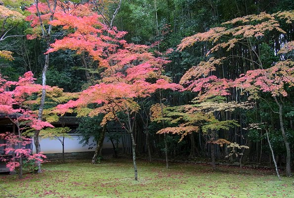 京都市・大徳寺~高桐院庭園