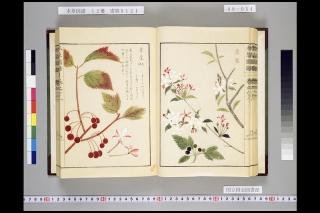 本草図譜巻六十三「棠梨」