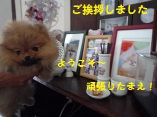 20150131164000fc5.jpg