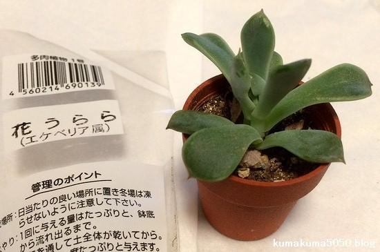 多肉植物_38